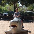 Shark Sitting