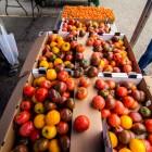 FarmersMarket07_Lorenzo_Basilio_web