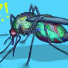 mosquito01_Amanda_Excell_web