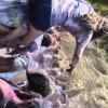 UCSB Celebrates Holi