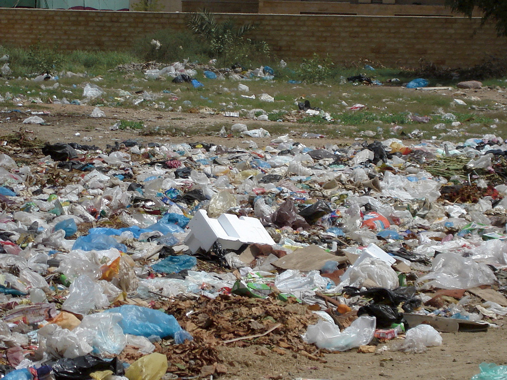 Plastic Bags A Bane For Both Animals And Humans